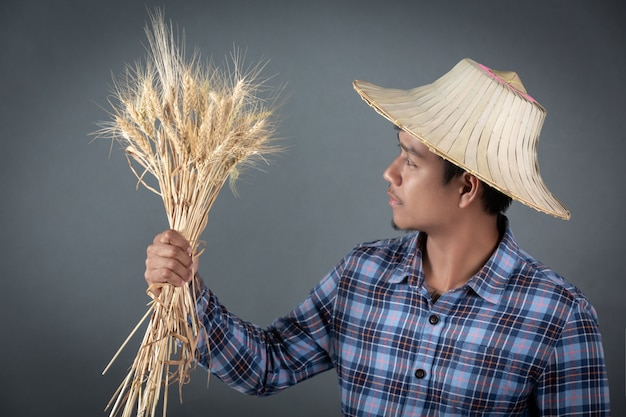 Landwirt, der eine gerste auf einem grauen hintergrund hält. Kostenlose Fotos