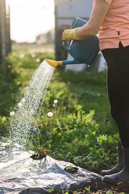 Landwirt, der einen gemüsegarten bei sonnenuntergang gießt, Premium Fotos