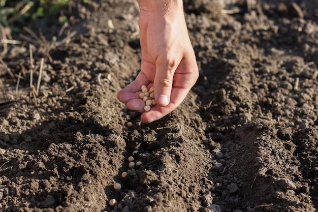 Landwirt, der gemüsesamen pflanzt Kostenlose Fotos