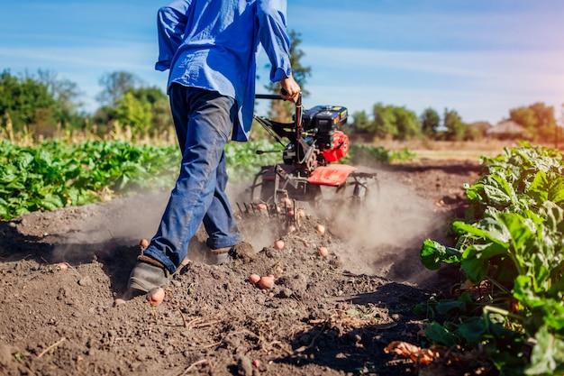Landwirt, der kleinen traktor für bodenbearbeitung und kartoffelgraben fährt. herbsternte kartoffelsammeln Premium Fotos