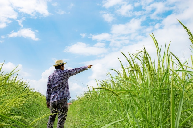 Landwirte auf reisfeldern scheinen mit blauem himmel zu erreichen. Premium Fotos