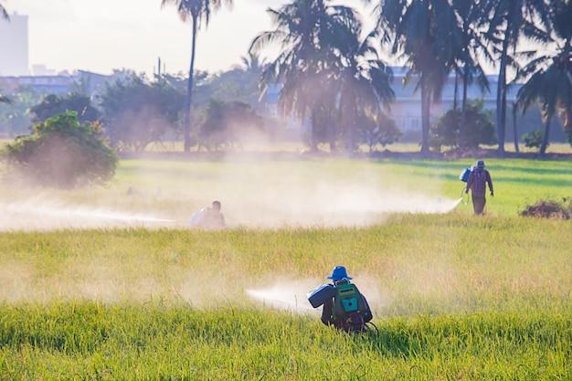 Landwirte sprühen ernten auf einem grünen gebiet. Premium Fotos