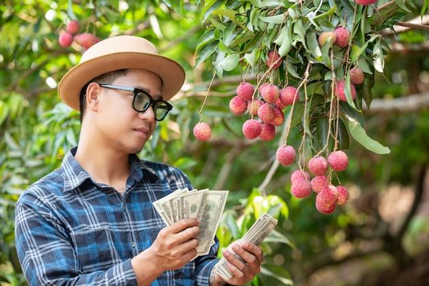 Landwirte zählen die karten für den verkauf von litschis. Kostenlose Fotos