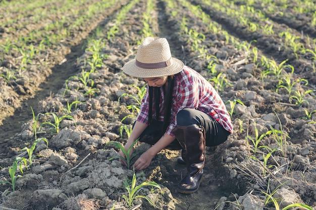 Landwirtfrau schaut mais auf dem gebiet. Kostenlose Fotos