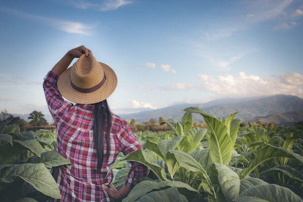 Landwirtfrau schaut tabak auf dem gebiet. Kostenlose Fotos