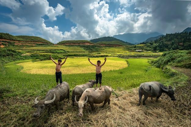 Landwirtjunge, der auf der rückseite eines büffels steht und spielt, während sie büffel auf den reisgebieten bei mu cang chai, yenbai, vietnam anheben Premium Fotos