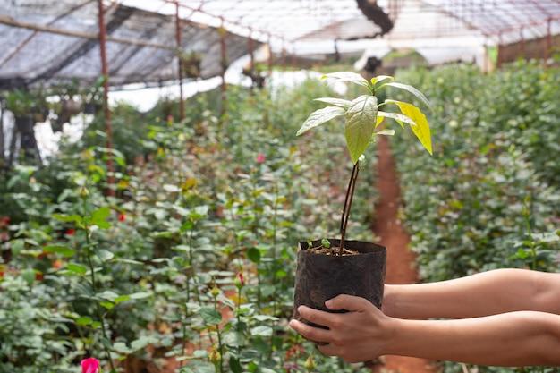 Landwirtschaft. junge frauen kontrollieren die arbeit im kinderzimmer. Kostenlose Fotos