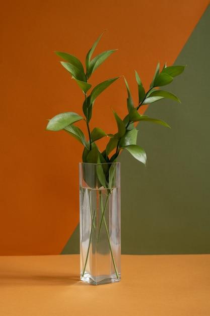 Lange schmale glasvase mit grüner hauspflanze, die auf braunem tisch auf doppelter farbwand im studio des entwurfs oder des hausraums steht Premium Fotos