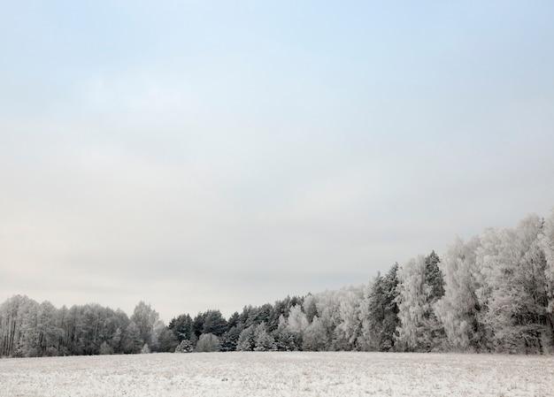Laubbäume ohne obstgarten in der wintersaison, äste sind nach dem sturm mit einer dicken schneeschicht bedeckt, himmel im hintergrund Premium Fotos