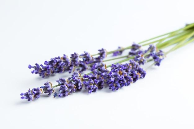Lavendel blumen isoliert Premium Fotos