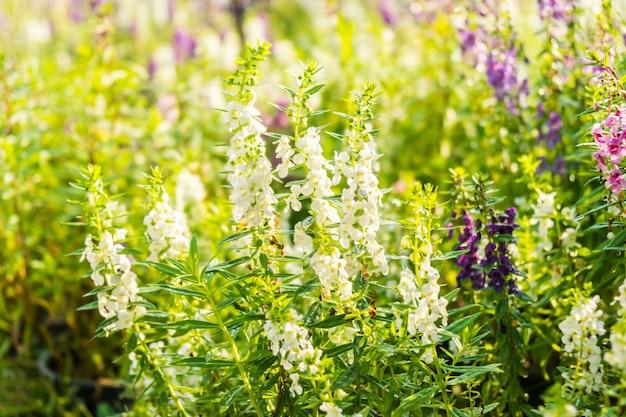 Lavendel-blumengarten Kostenlose Fotos