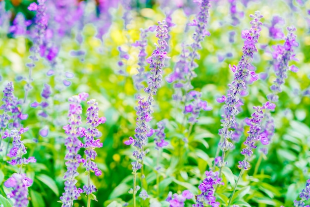 Lavendelblume Kostenlose Fotos