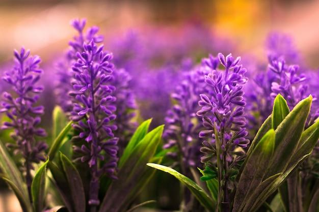 Lavendelblumen, pastellfarben und unschärfehintergrund. Premium Fotos