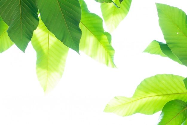 Leaved grüner naturhintergrund. Premium Fotos