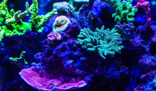 Lebende korallen in einem großen meerwasseraquarium Premium Fotos