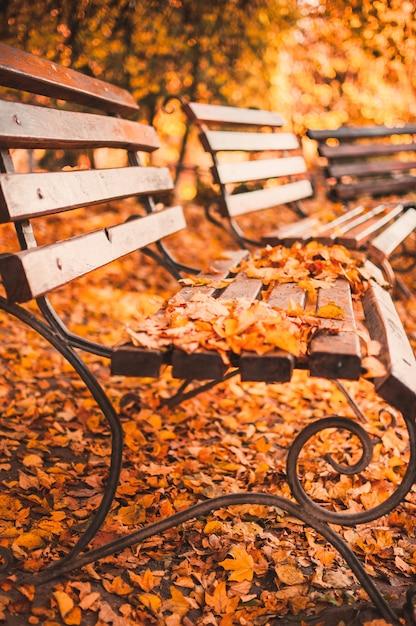 Leere bank im herbstpark wird mit den roten und gelben trockenen blättern gestreut. goldener herbst-konzept. entspannender ort zum nachdenken und nachdenken. Premium Fotos
