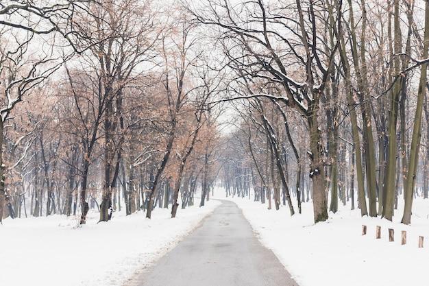 Leere straße mit schnee deckte landschaft im winter ab Premium Fotos