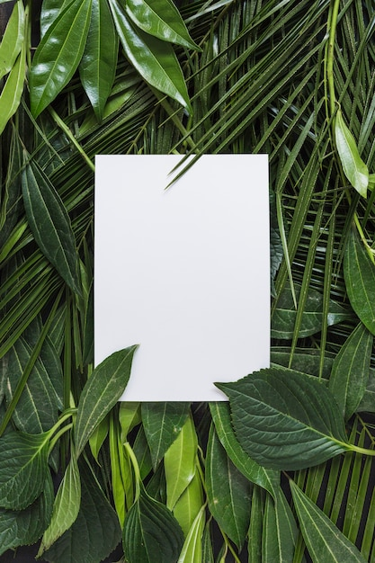 Leere weiße seite umgeben mit grünen blättern Kostenlose Fotos