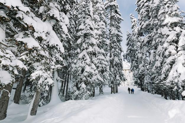 Leute im schneebedeckten kiefernwald Kostenlose Fotos