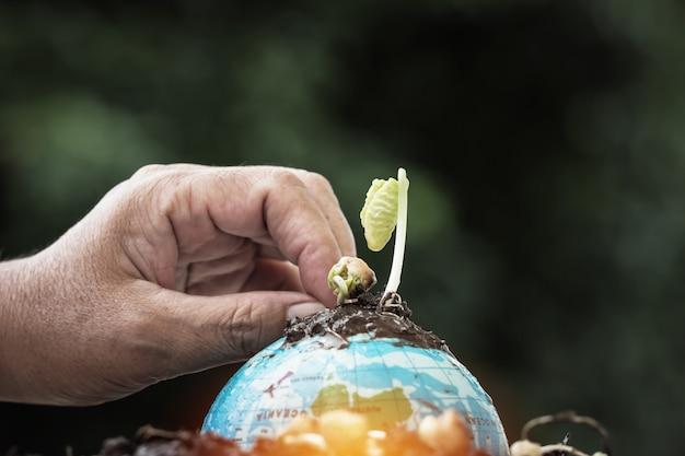 Leutehände, die anlage auf kugelmodell auf dem regnen des hintergrundes, grüne weltumweltökologie säen Premium Fotos