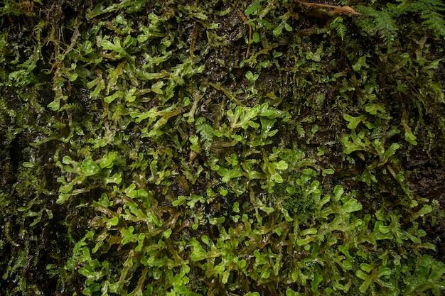 Levada von caldeirao verde Premium Fotos