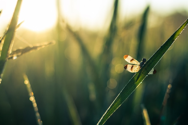 Libelle fängt morgens ein grünes blatt. Premium Fotos