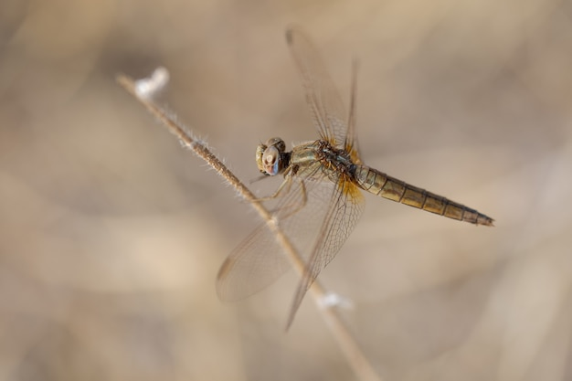Libelle in ihrer natürlichen umgebung. Premium Fotos