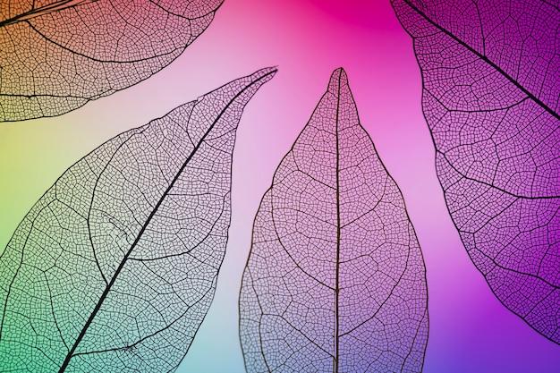 Lila gefärbte lebendige herbstblätter Kostenlose Fotos