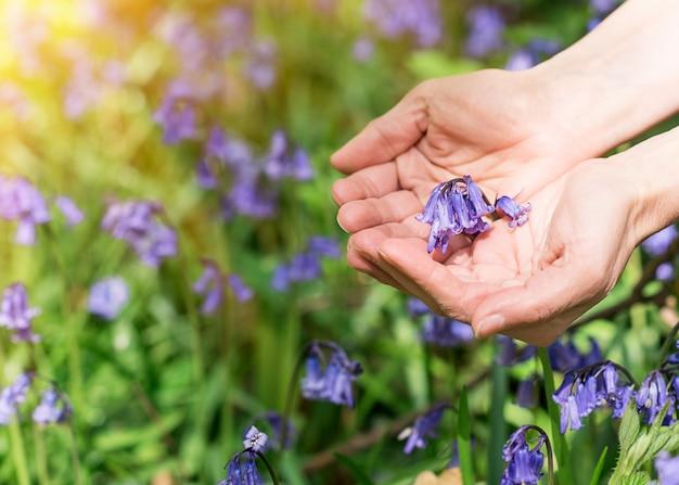 Lila glockenblumen in den palmen gegen glockenblumenwiese Premium Fotos