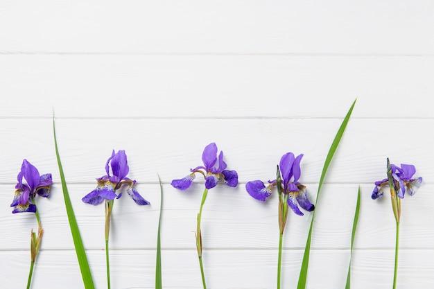 Lila iris blumen Premium Fotos