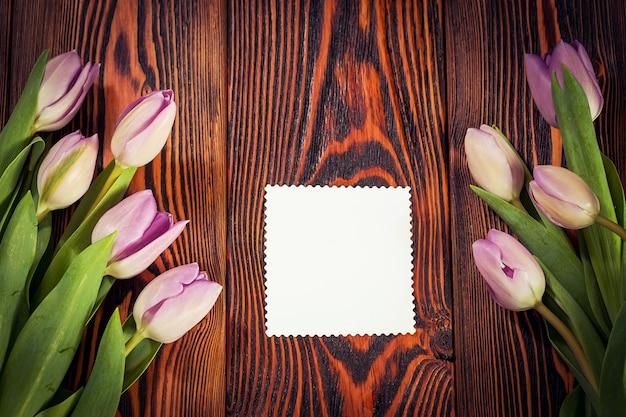Lila tulpen blumen Premium Fotos