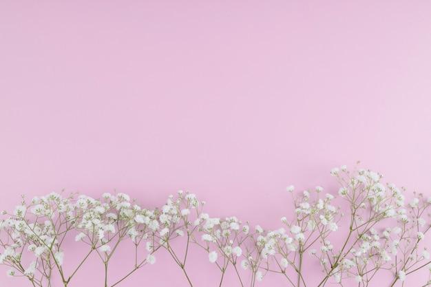 Linie der weißen blumen der draufsicht Kostenlose Fotos