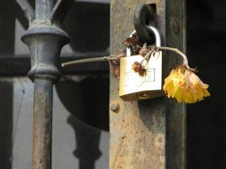 Lockflower, romantik Kostenlose Fotos