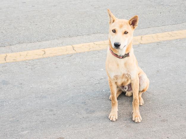 Lokaler thailändischer hund in einer ländlichen straße Kostenlose Fotos