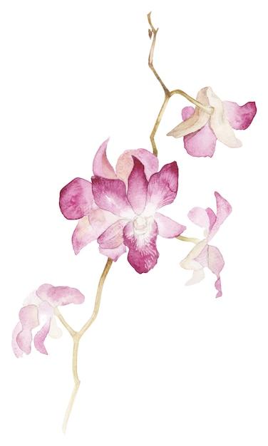 Lokalisierte aquarell orhid niederlassung auf weißem hintergrund Premium Fotos
