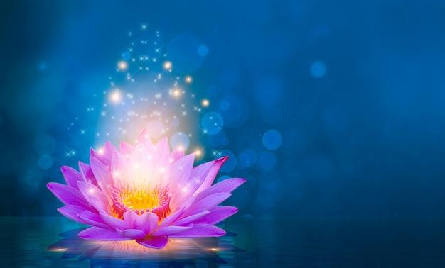 Lotos-rosa-hellpurpurnes sich hin- und herbewegendes licht funkeln lila hintergrund Premium Fotos