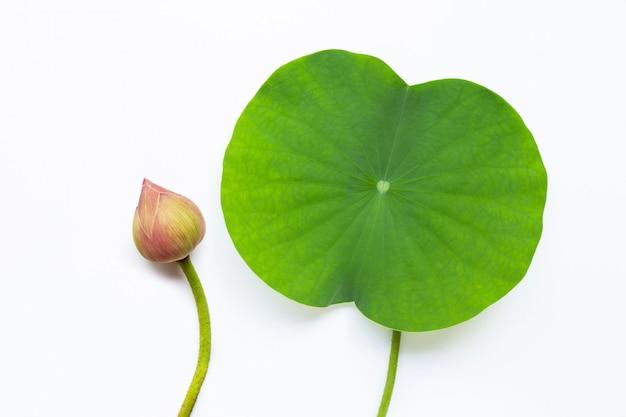 Lotusblatt auf weiß Premium Fotos