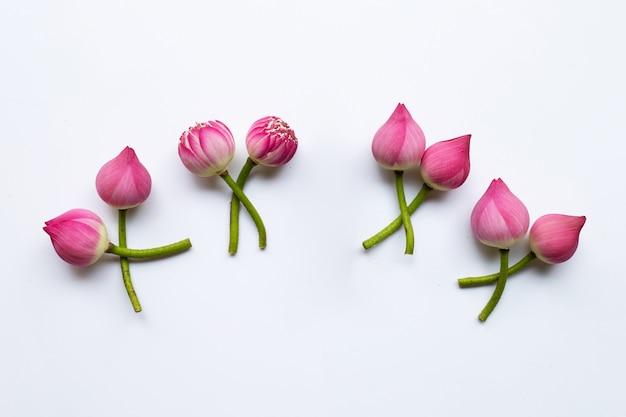 Lotusblumen auf weiß. Premium Fotos
