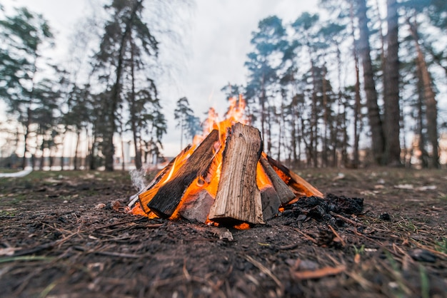 Low angle lagerfeuer in der natur Premium Fotos