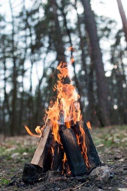Low angle lagerfeuer mit flammen Kostenlose Fotos