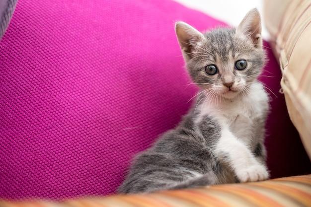 Low angle shot eines niedlichen kätzchens, das auf der couch sitzt Kostenlose Fotos