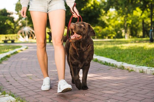 Lowsection-ansicht einer frau mit ihrem hund, der auf gehweg im park geht Kostenlose Fotos