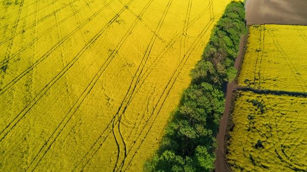 Luftansicht des gelben rapsfeldes und der landstraße von oben Premium Fotos