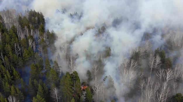 Luftansicht rauch des verheerenden feuers. Premium Fotos