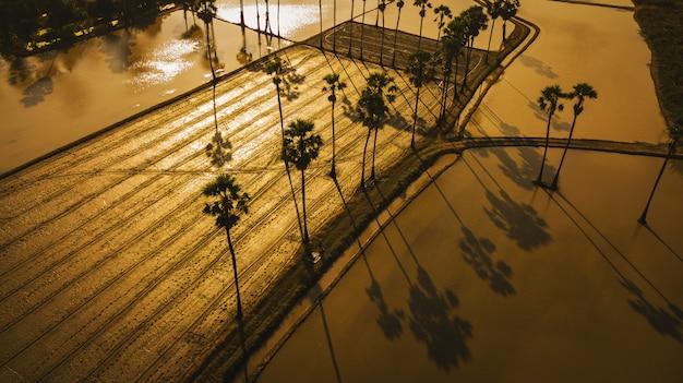Luftaufnahme der zuckerpalme mit sonnenunterganghimmel Premium Fotos
