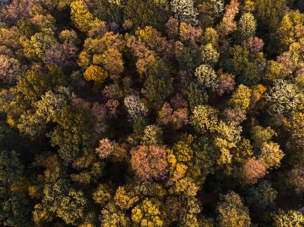 Luftaufnahme des herbstwaldes Kostenlose Fotos