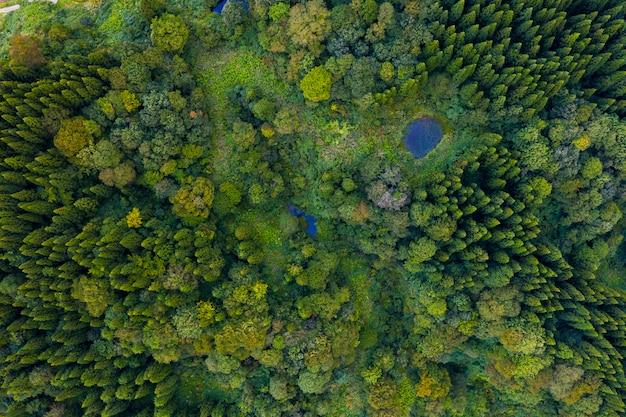 Luftaufnahme des kiefernwaldes im sommer Premium Fotos
