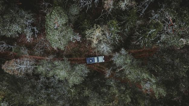 Luftaufnahme eines autos, das in einem wald fährt, der von hohen bäumen umgeben ist Kostenlose Fotos