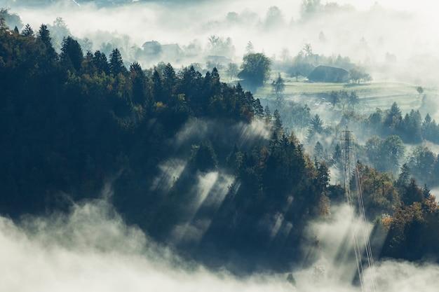 Luftaufnahme eines schönen baumwaldes bedeckt mit nebel in bled, slowenien Kostenlose Fotos