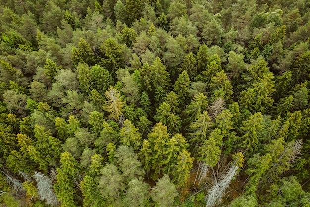 Luftaufnahme eines waldes mit vielen hohen grünen bäumen Kostenlose Fotos